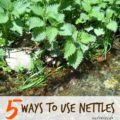 5 Ways to Use Nettles