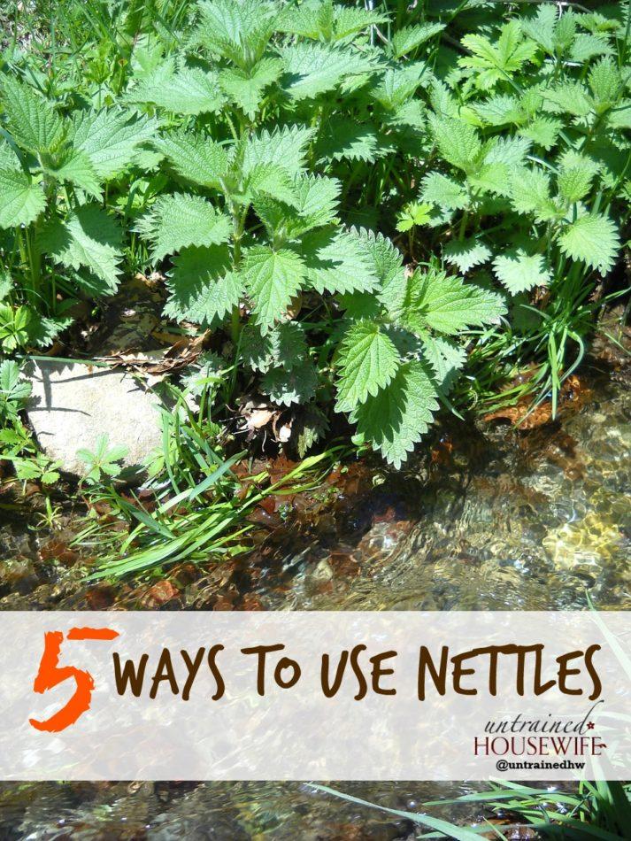 5 Ways to Use Nettles