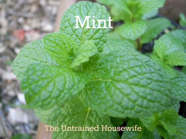 Mint: Home Remedies from Your Herb Garden