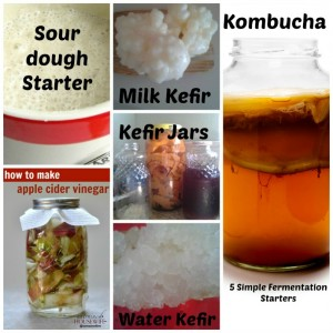 5 Simple Fermentation Starters Every Kitchen Should Have