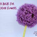 Summer Bulbs for Mid-Season Flowers