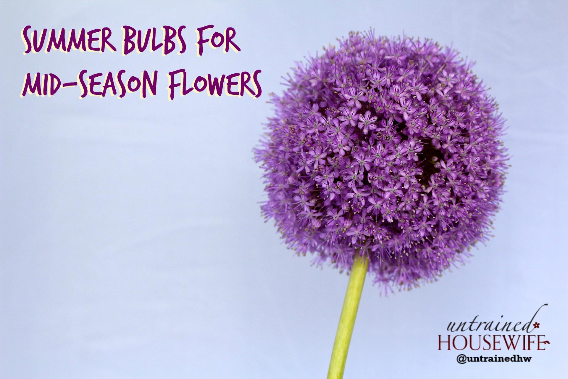 Summer Bulbs For Mid Season Flowers