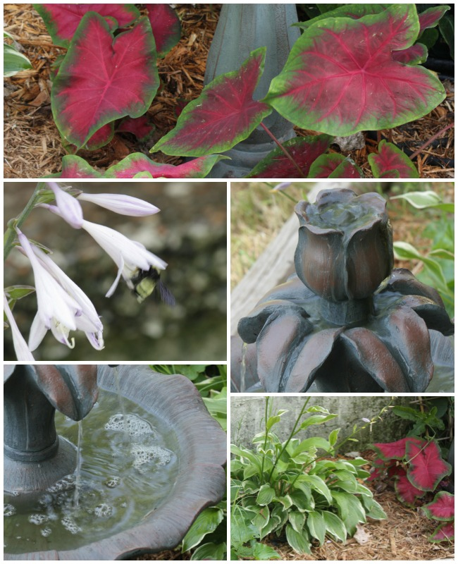 Create a beautiful and easy water feature with bold, lush foliage.