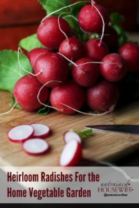 Heirloom Radishes For the Home Vegetable Garden