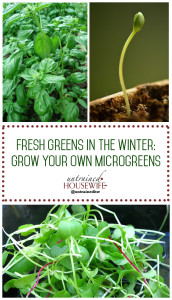 Fresh Greens In the Winter: Grow Your Own Microgreens