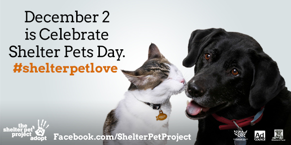 Shelter Pet Project - how can you help?