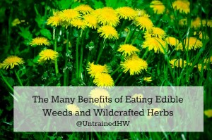 Foraging: The Benefits of Eating Edible Weeds and Wildcrafted Herbs