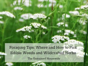 Foraging Tips: Where and How To Pick Wildcrafted Herbs
