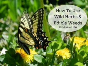 Edibile Weeds: Dandelion - Learn how to use wild herbs and edibles!