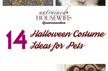 14 Halloween Costume Ideas for Pets