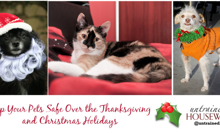 Keep Your Pets Safe Over the Thanksgiving and Christmas Holidays