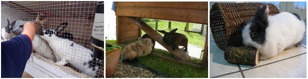 What a Rabbit Needs for Good Health @UntrainedHW #homesteading #backyardfarming