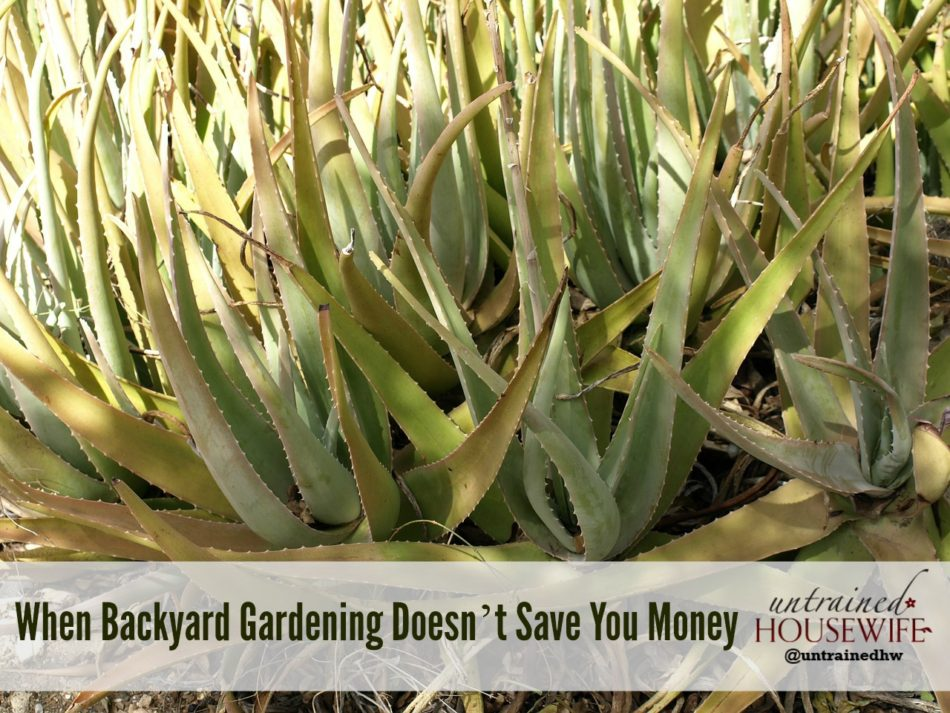 When Backyard Gardening Doesn't Save You Money