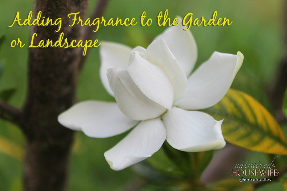 Adding Fragrance to the Garden or Landscape