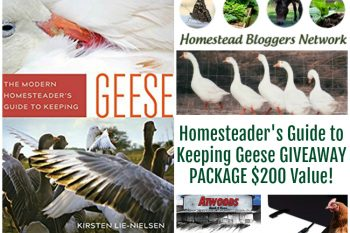 The Modern Homesteader's Guide to Keeping Geese Book Launch and Giveaway