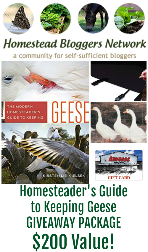 The Modern Homesteader's Guide to Keeping Geese Book and Giveaway.